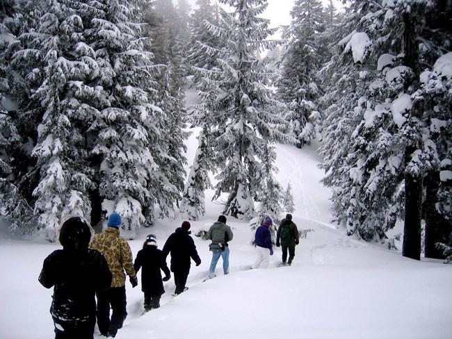 Winter Wonderland Safety